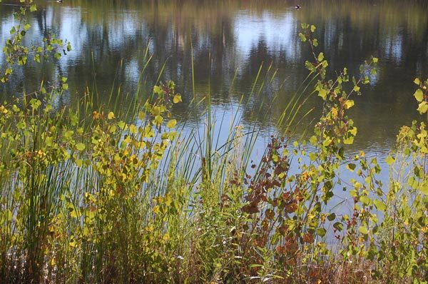 Plants along the Rio Grande